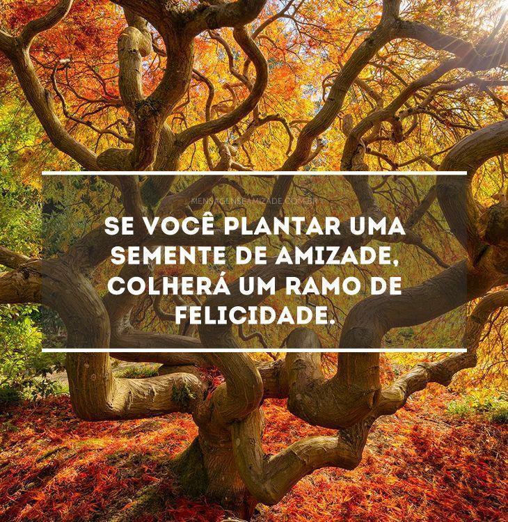 <p>Se você plantar uma semente de amizade, colherá um ramo de felicidade.</p>