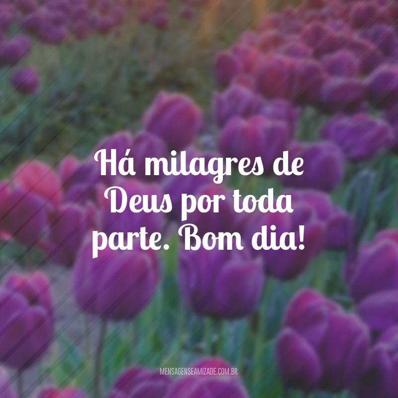 Há milagres de Deus por toda parte. Bom dia!